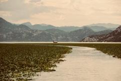 Skadar Lake - Monténégro